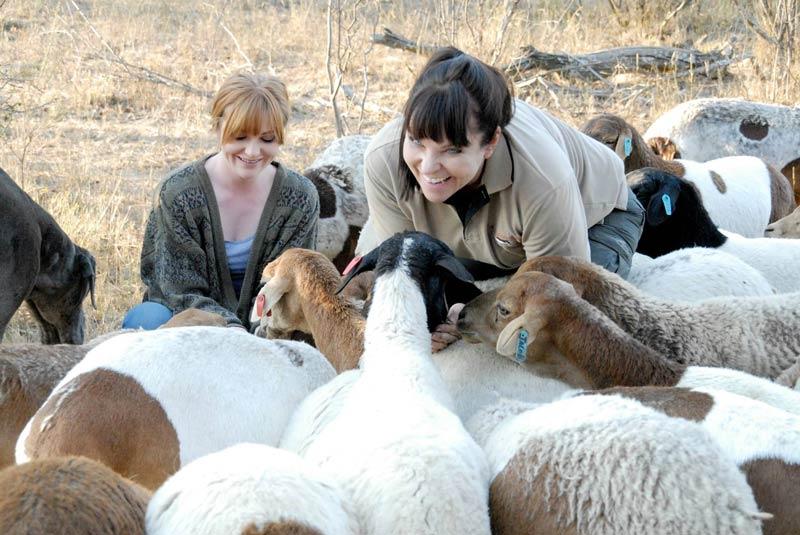 """""""Savannah with sheep"""""""